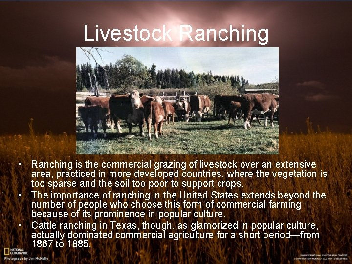 Livestock Ranching • Ranching is the commercial grazing of livestock over an extensive area,