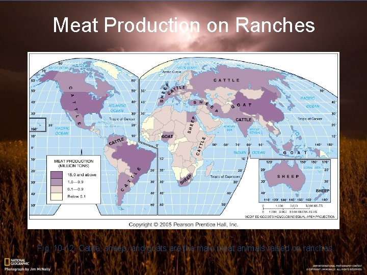Meat Production on Ranches Fig. 10 -12: Cattle, sheep, and goats are the main