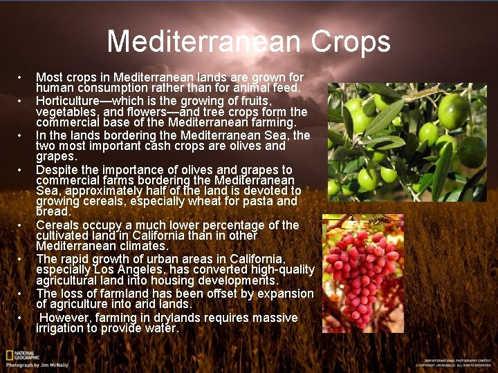 Mediterranean Crops • • Most crops in Mediterranean lands are grown for human consumption