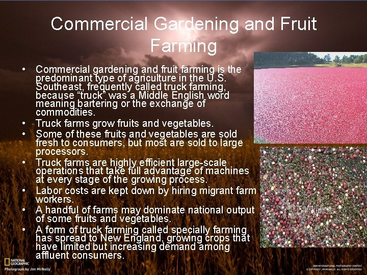 Commercial Gardening and Fruit Farming • Commercial gardening and fruit farming is the predominant