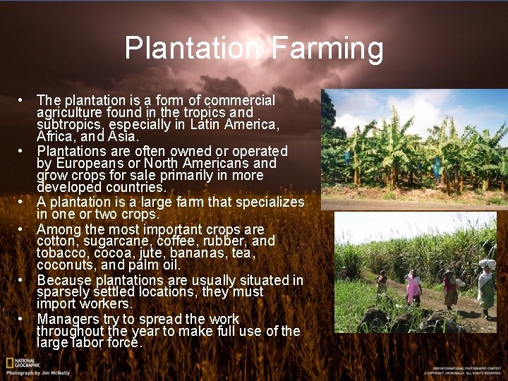 Plantation Farming • The plantation is a form of commercial agriculture found in the