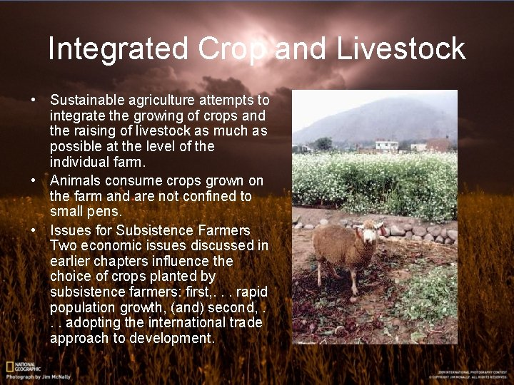 Integrated Crop and Livestock • Sustainable agriculture attempts to integrate the growing of crops