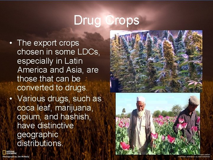Drug Crops • The export crops chosen in some LDCs, especially in Latin America