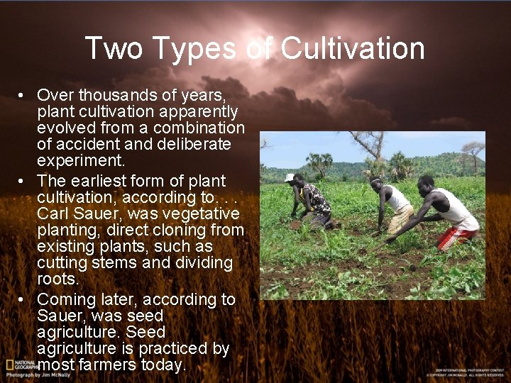 Two Types of Cultivation • Over thousands of years, plant cultivation apparently evolved from