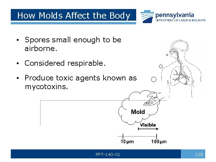 How Molds Affect the Body • Spores small enough to be airborne. • Considered