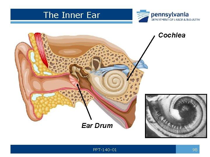 The Inner Ear Cochlea Ear Drum PPT-140 -01 98