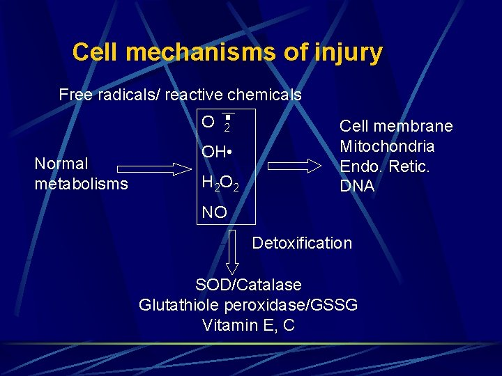Cell mechanisms of injury Free radicals/ reactive chemicals O Normal metabolisms 2 OH •