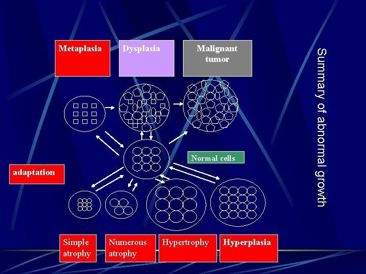 Dysplasia Malignant tumor Normal cells adaptation Simple atrophy Numerous atrophy Hyperplasia Summary of abnormal