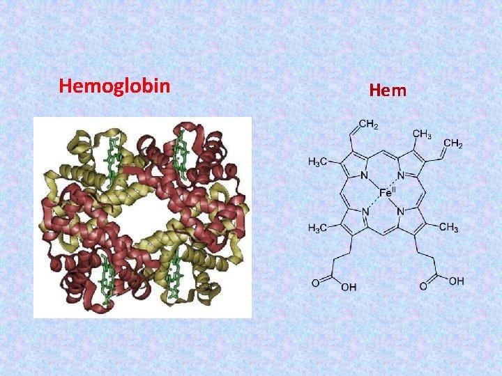Hemoglobin Hem