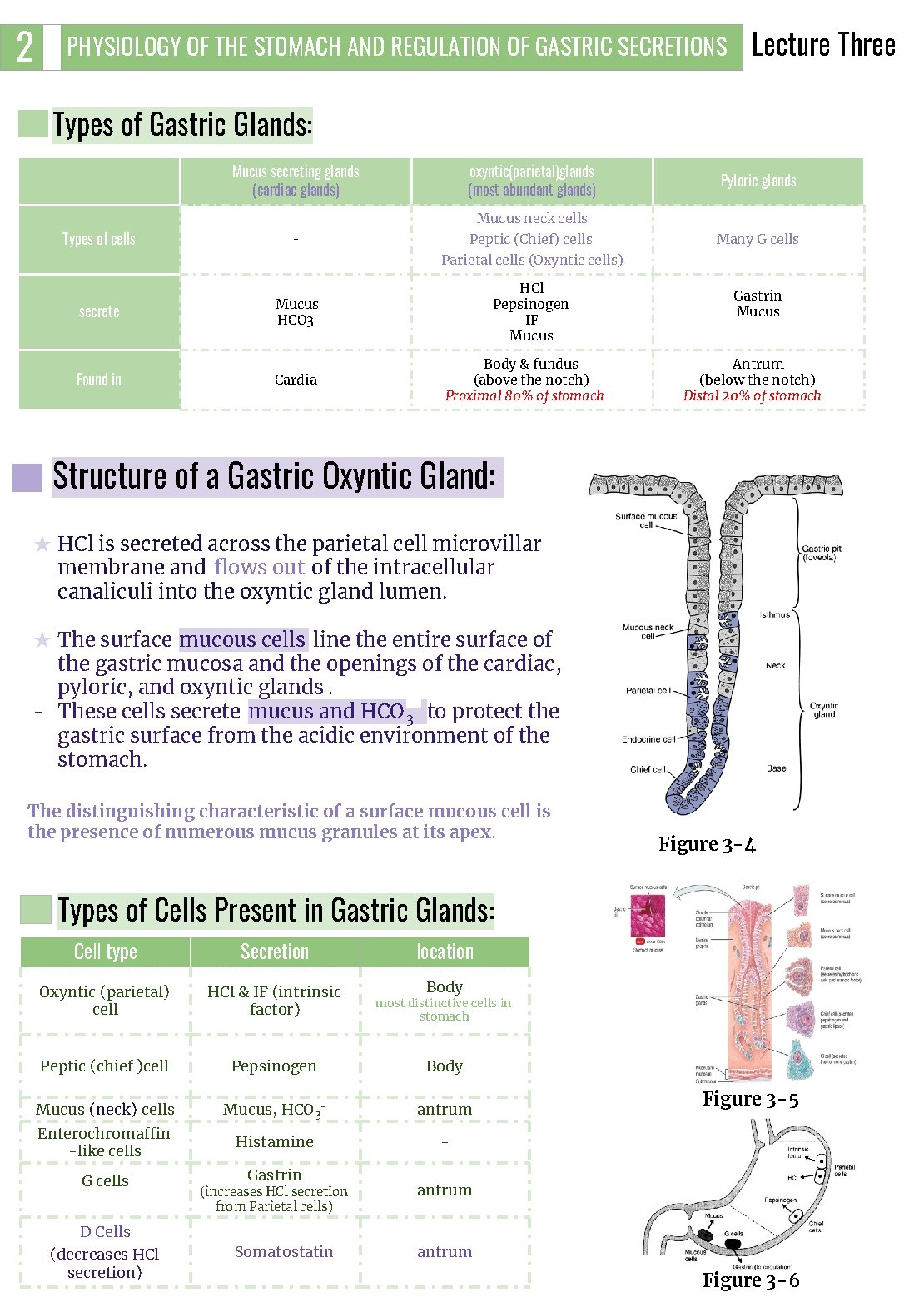 2 PHYSIOLOGY OF THE STOMACH AND REGULATION OF GASTRIC SECRETIONS Lecture Three Types of
