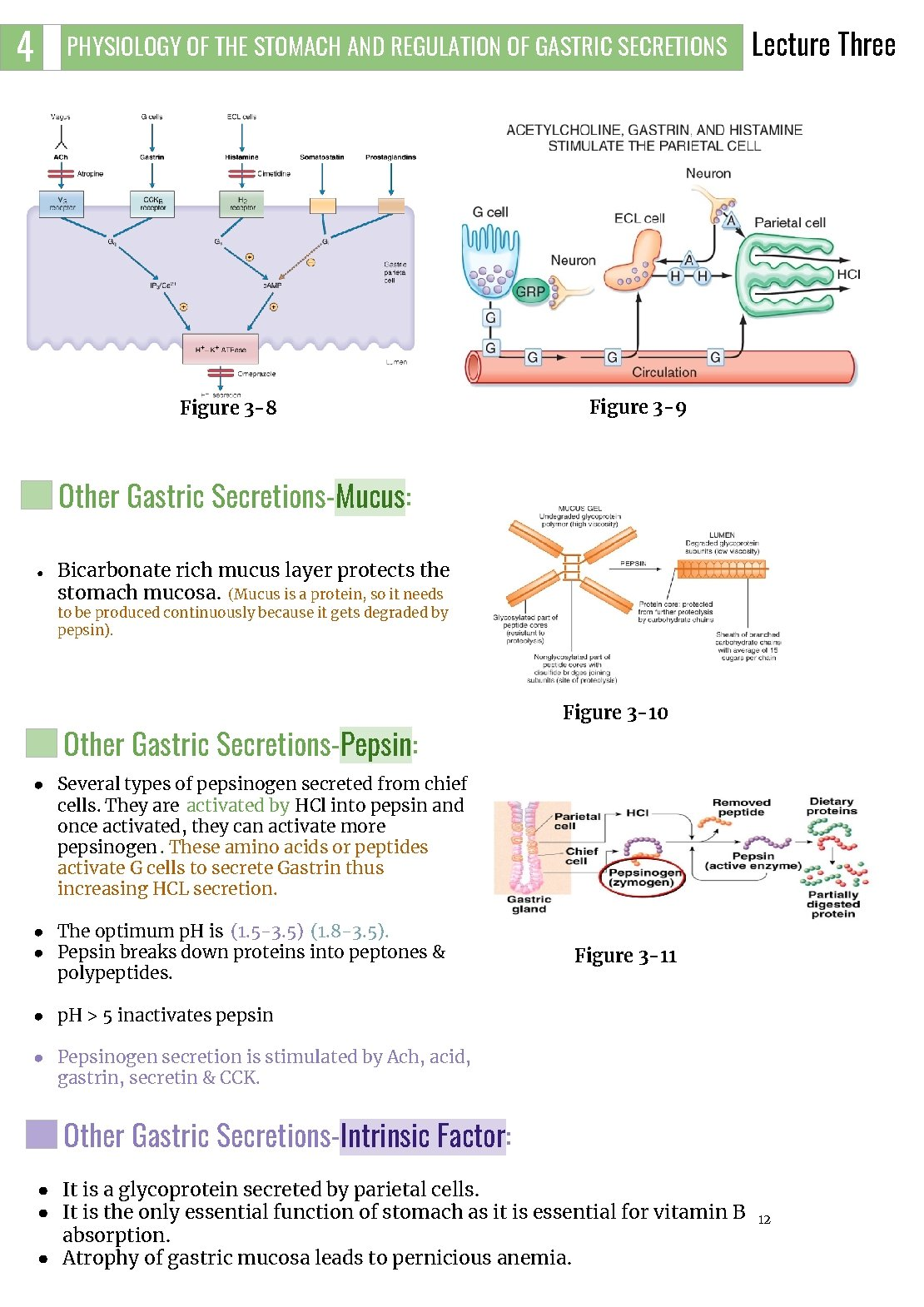 4 PHYSIOLOGY OF THE STOMACH AND REGULATION OF GASTRIC SECRETIONS Figure 3 -8 Lecture