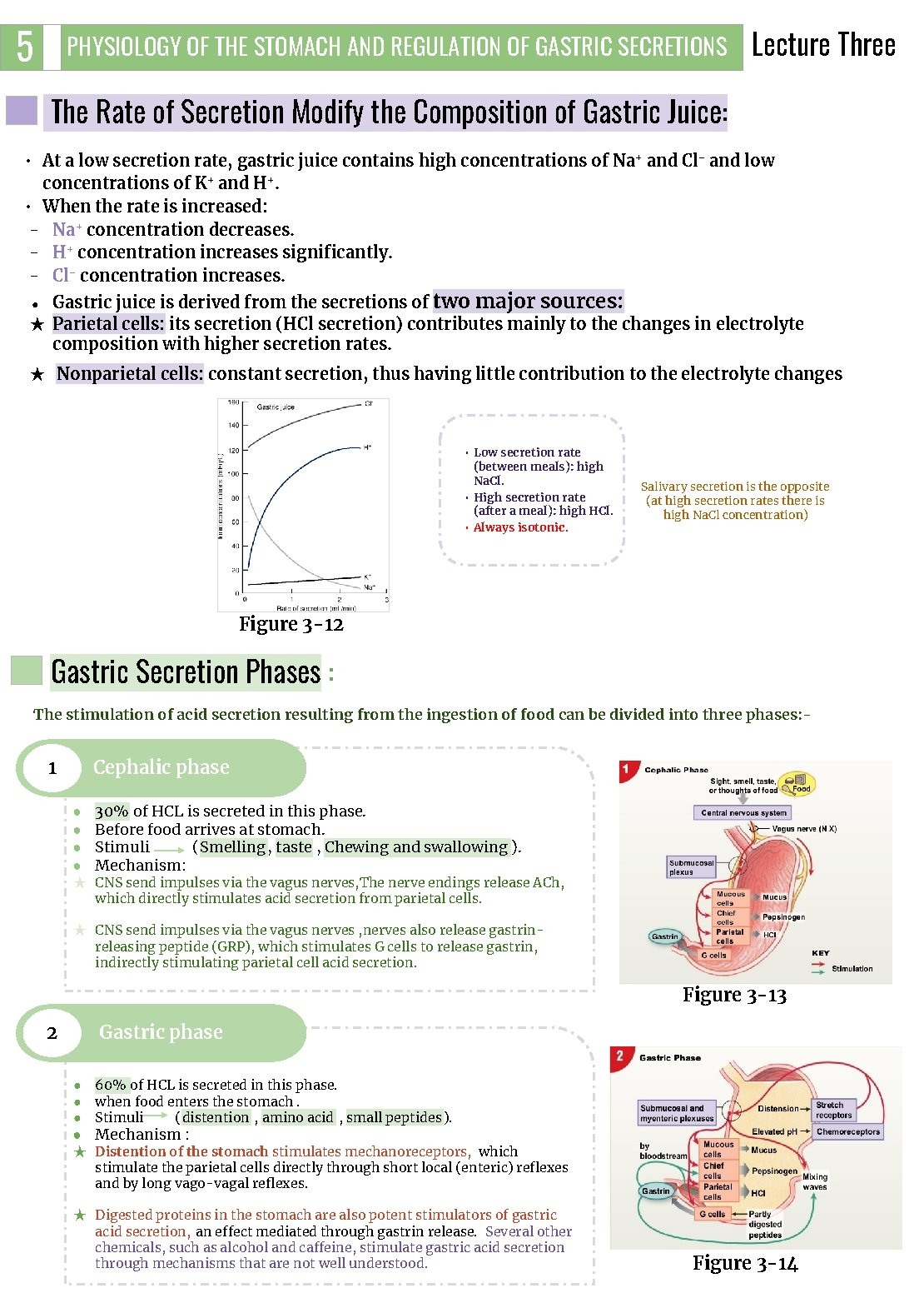 5 PHYSIOLOGY OF THE STOMACH AND REGULATION OF GASTRIC SECRETIONS Lecture Three The Rate