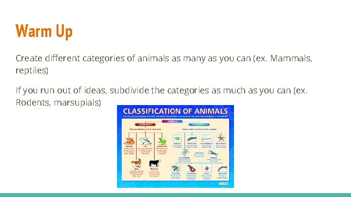 Warm Up Create different categories of animals as many as you can (ex. Mammals,