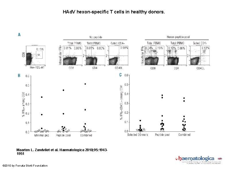 HAd. V hexon-specific T cells in healthy donors. Maarten L. Zandvliet et al. Haematologica