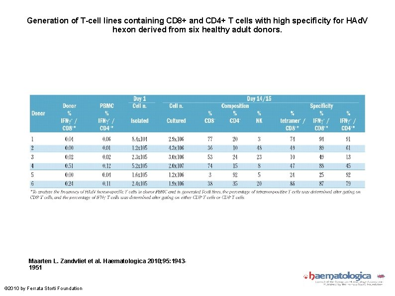 Generation of T-cell lines containing CD 8+ and CD 4+ T cells with high
