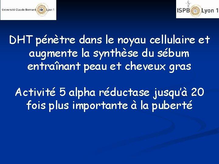 DHT pénètre dans le noyau cellulaire et augmente la synthèse du sébum entraînant peau