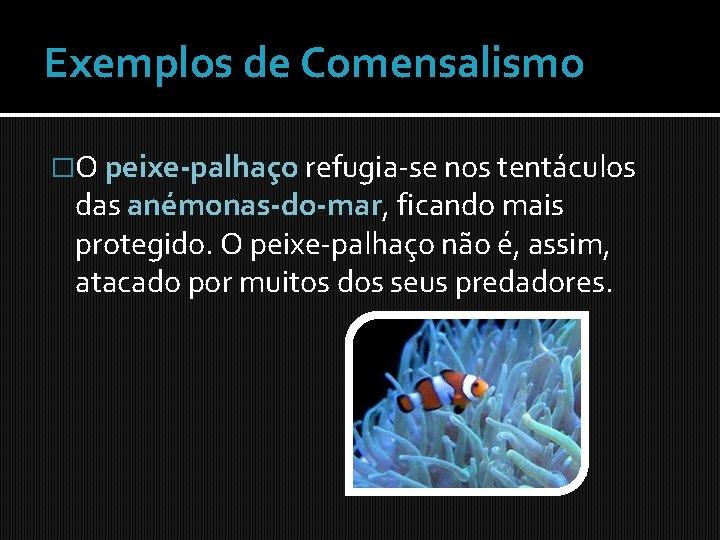 Exemplos de Comensalismo �O peixe-palhaço refugia-se nos tentáculos das anémonas-do-mar, ficando mais protegido. O