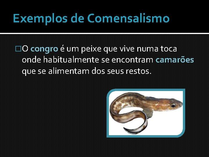 Exemplos de Comensalismo �O congro é um peixe que vive numa toca onde habitualmente