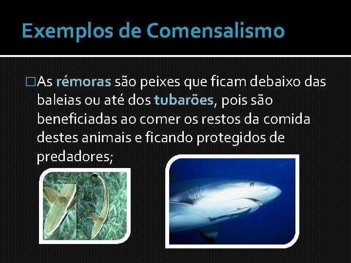 Exemplos de Comensalismo �As rémoras são peixes que ficam debaixo das baleias ou até