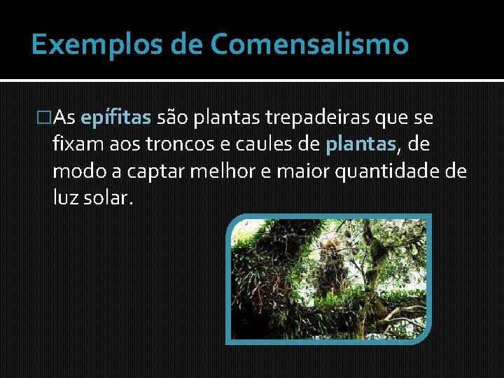 Exemplos de Comensalismo �As epífitas são plantas trepadeiras que se fixam aos troncos e