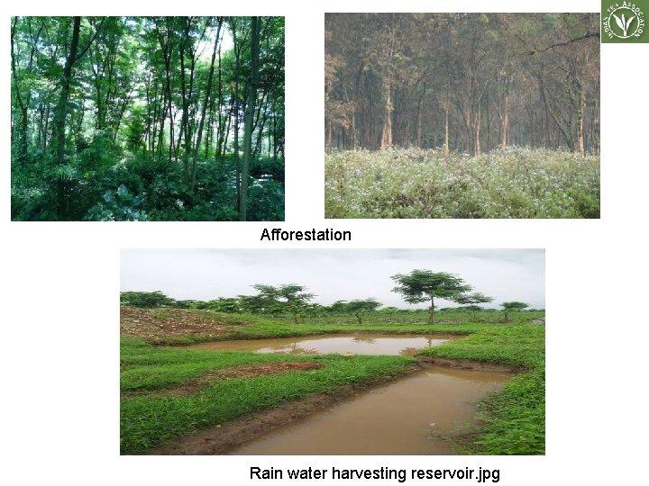 Afforestation Rain water harvesting reservoir. jpg
