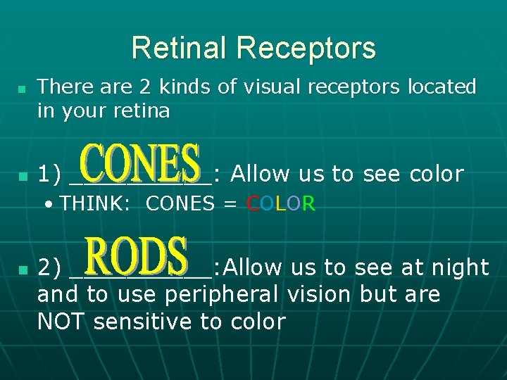 Retinal Receptors n n There are 2 kinds of visual receptors located in your