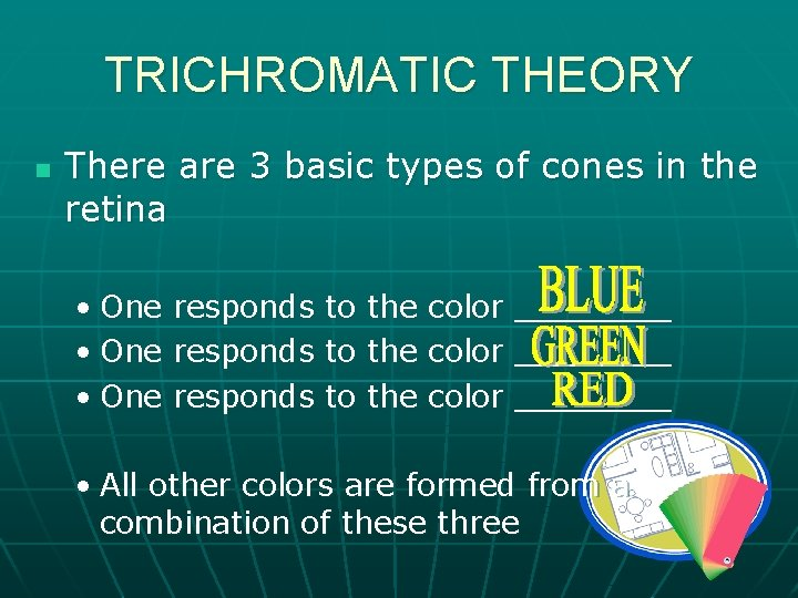 TRICHROMATIC THEORY n There are 3 basic types of cones in the retina •