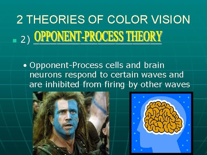 2 THEORIES OF COLOR VISION n 2) ___________ • Opponent-Process cells and brain neurons