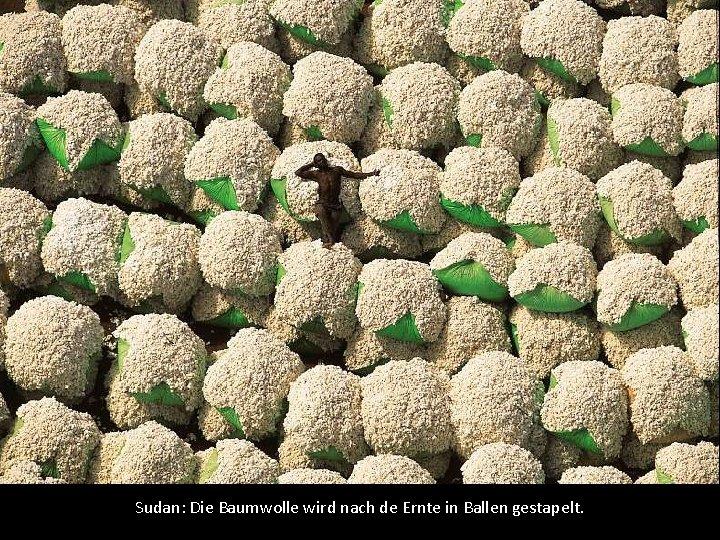 Sudan: Die Baumwolle wird nach de Ernte in Ballen gestapelt.
