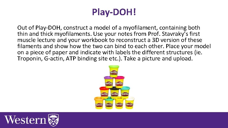 Play-DOH! Out of Play-DOH, construct a model of a myofilament, containing both thin and