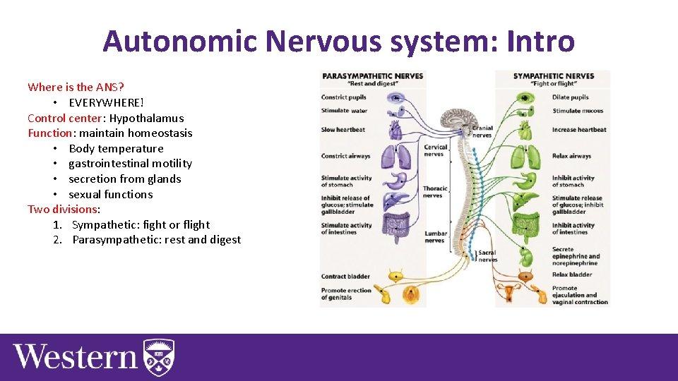 Autonomic Nervous system: Intro Where is the ANS? • EVERYWHERE! Control center: Hypothalamus Function: