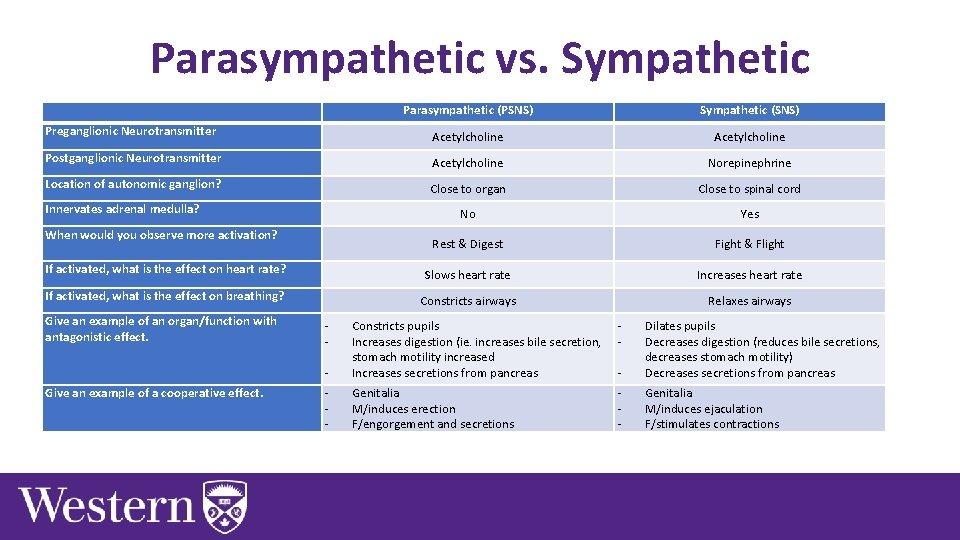 Parasympathetic vs. Sympathetic Parasympathetic (PSNS) Sympathetic (SNS) Preganglionic Neurotransmitter Acetylcholine Postganglionic Neurotransmitter Acetylcholine Norepinephrine