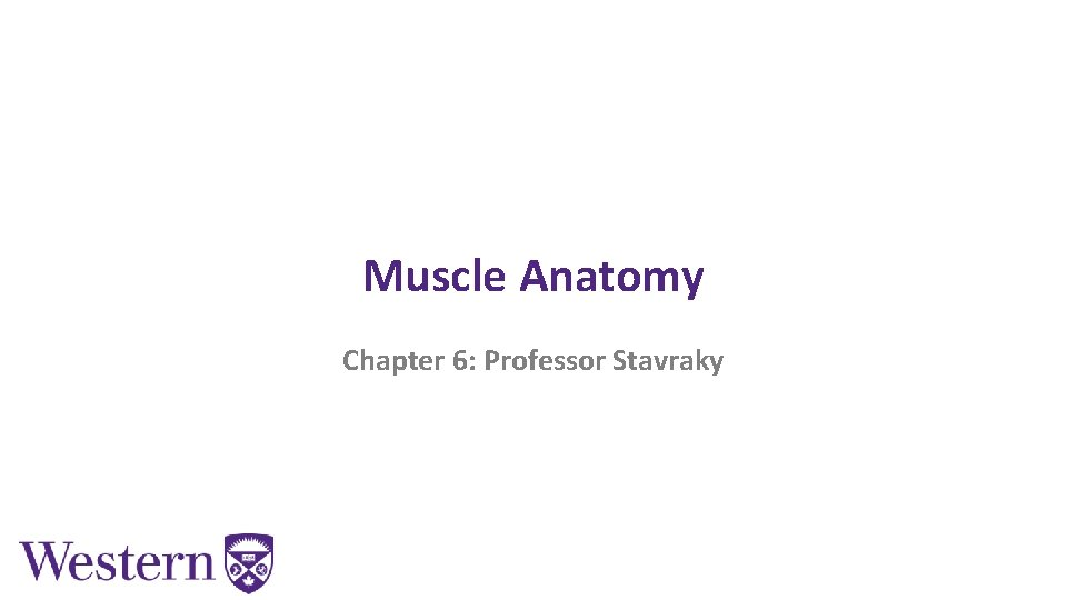 Muscle Anatomy Chapter 6: Professor Stavraky