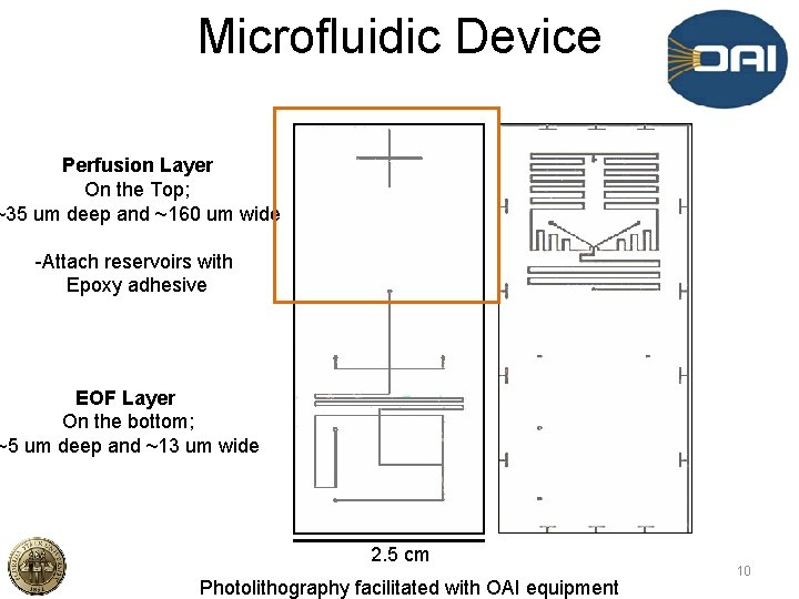 Microfluidic Device Perfusion Layer On the Top; ~35 um deep and ~160 um wide