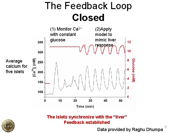 The Feedback Loop Closed (1) Monitor Ca 2+ with constant glucose (2)Apply model to