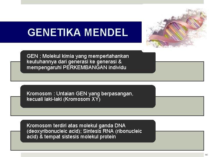 GENETIKA MENDEL GEN ; Molekul kimia yang mempertahankan keutuhannya dari generasi ke generasi &