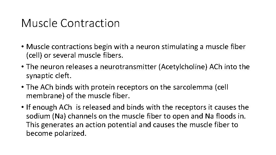 Muscle Contraction • Muscle contractions begin with a neuron stimulating a muscle fiber (cell)