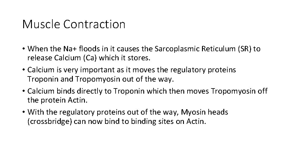 Muscle Contraction • When the Na+ floods in it causes the Sarcoplasmic Reticulum (SR)