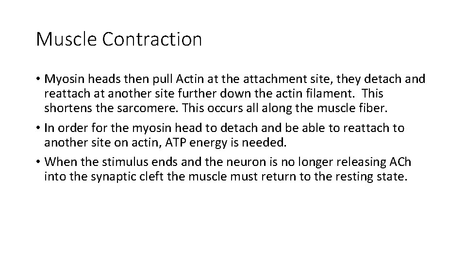 Muscle Contraction • Myosin heads then pull Actin at the attachment site, they detach