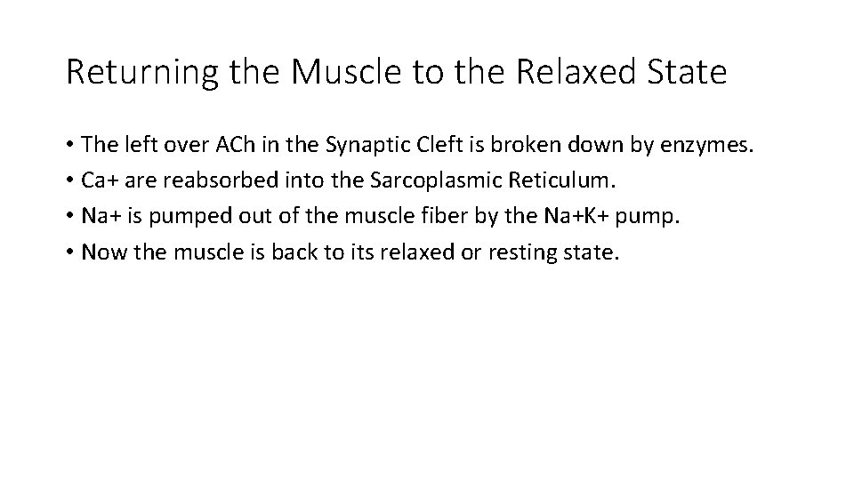 Returning the Muscle to the Relaxed State • The left over ACh in the