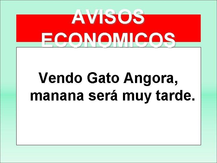 AVISOS ECONOMICOS Vendo Gato Angora, manana será muy tarde.