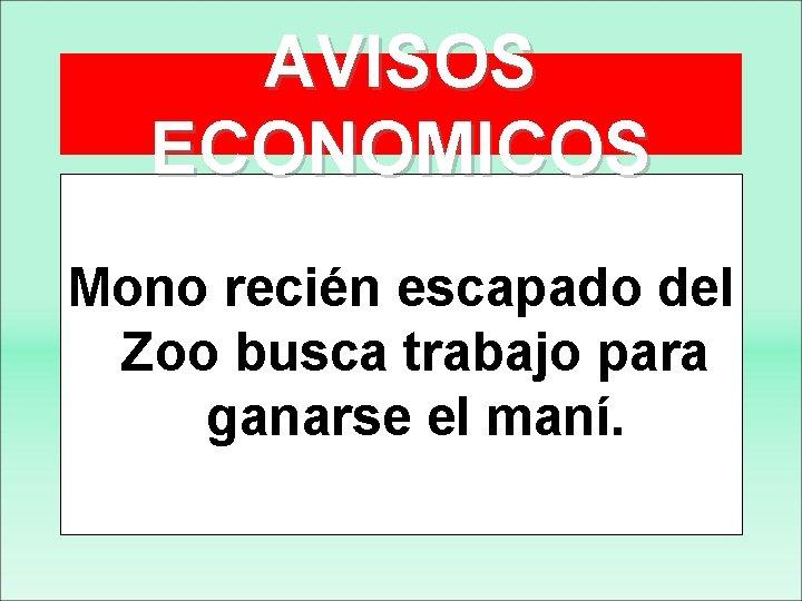 AVISOS ECONOMICOS Mono recién escapado del Zoo busca trabajo para ganarse el maní.