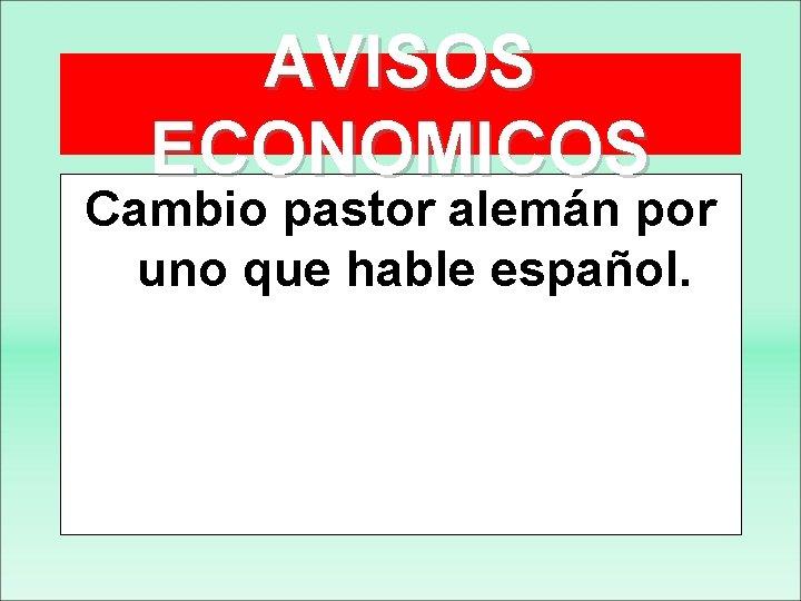AVISOS ECONOMICOS Cambio pastor alemán por uno que hable español.