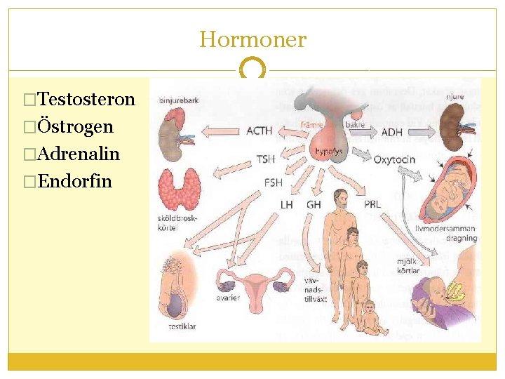 Hormoner �Testosteron �Östrogen �Adrenalin �Endorfin