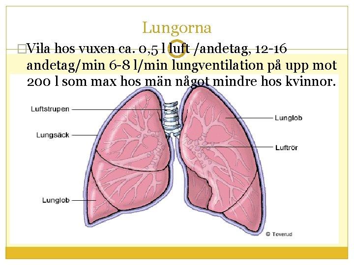 Lungorna �Vila hos vuxen ca. 0, 5 l luft /andetag, 12 -16 andetag/min 6