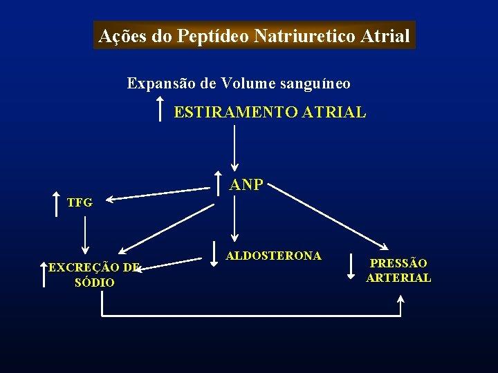 Ações do Peptídeo Natriuretico Atrial Expansão de Volume sanguíneo ESTIRAMENTO ATRIAL ANP TFG EXCREÇÃO