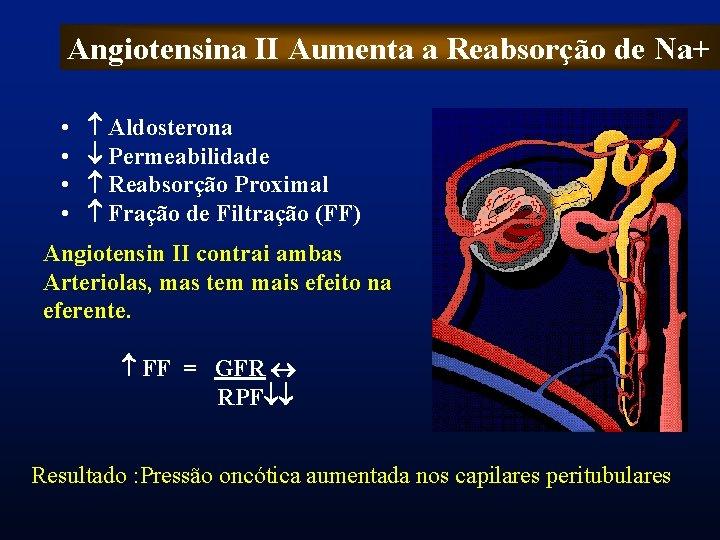 Angiotensina II Aumenta a Reabsorção de Na+ • • Aldosterona Permeabilidade Reabsorção Proximal Fração