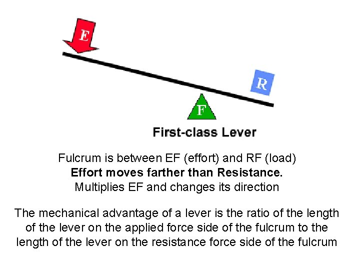 Fulcrum is between EF (effort) and RF (load) Effort moves farther than Resistance. Multiplies