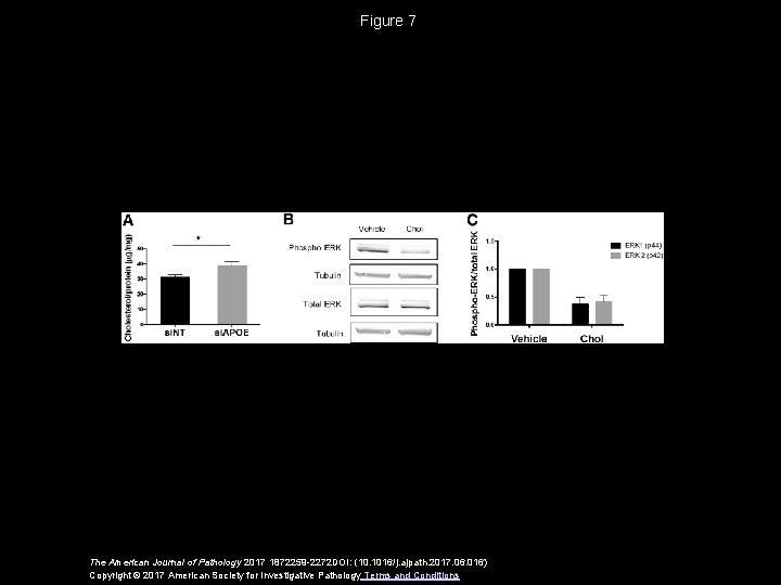 Figure 7 The American Journal of Pathology 2017 1872259 -2272 DOI: (10. 1016/j. ajpath.