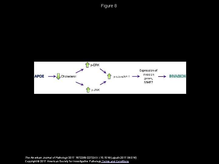 Figure 8 The American Journal of Pathology 2017 1872259 -2272 DOI: (10. 1016/j. ajpath.